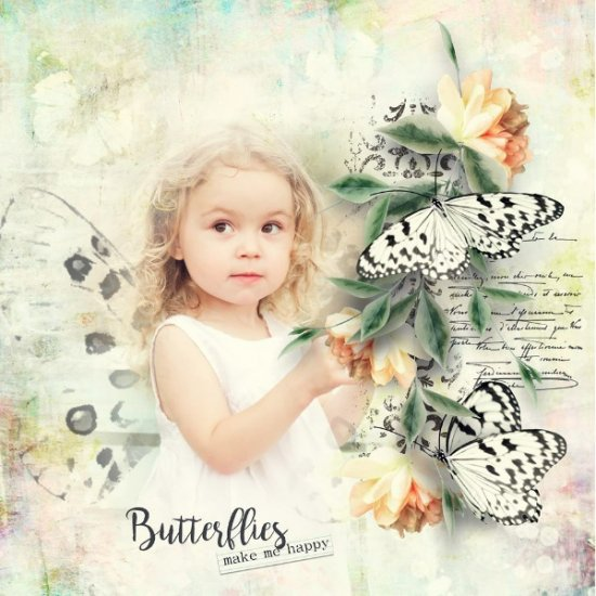 The Beautiful Butterfly and Insect Collection - Click Image to Close
